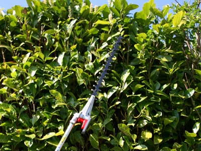 Petrol Long Reach Hedge Trimmer